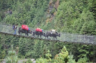 236237-more-yaks-on-a-bridge-lukla-nepal.jpg
